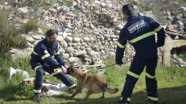 493 – EN PORTADA: Os contamos cómo trabajan unos bomberos muy especiales: La Unidad Canina de Rescate de Bomberos de Valencia